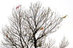 Algunas cometas en el árbol Fotografía de archivo