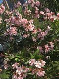 Algunas flores Foto de archivo