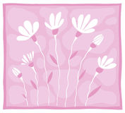 Algunas flores blancas en un fondo rosado Fotos de archivo