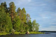 Algunas gaviotas en árbol de pino muerto cerca del lago Imágenes de archivo libres de regalías