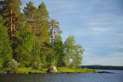 Algunas gaviotas en árbol de pino muerto cerca del lago Foto de archivo libre de regalías