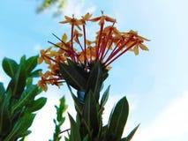 Algunas pequeñas flores en luz del sol con las hojas verdes debajo de ellas fotos de archivo