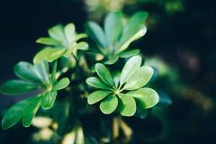 Algunas plantas verdes en la oscuridad fotografía de archivo libre de regalías