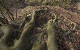 Algunas raíces Imagenes de archivo