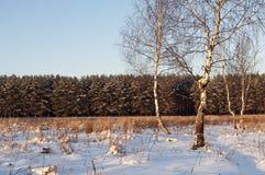 Algunos árboles de abedul desnudos en un claro del bosque, invierno Imagen de archivo libre de regalías