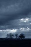 Algunos árboles en campo Fotografía de archivo