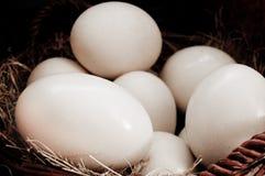 Algunos huevos de la avestruz en cesta Imagenes de archivo