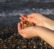Algunos pedazos de ámbar encontraron en la costa báltica Imagen de archivo