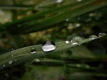 Algunos waterdrops en el tronco de la hierba creado después de llover Fotos de archivo libres de regalías