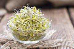 Alguns brotos frescos dos brócolis fotografia de stock