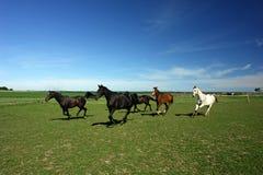 Alguns cavalos em um campo. Imagens de Stock Royalty Free