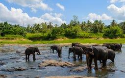Alguns elefantes de banho em um lago fotografia de stock