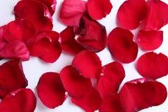 Alguns folha cor-de-rosa no fundo branco Imagens de Stock