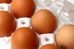 Alguns ovos fotografia de stock royalty free