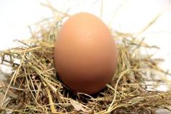 Alguns ovos crus imagem de stock