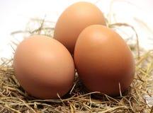 Alguns ovos crus imagem de stock royalty free