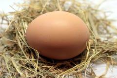 Alguns ovos crus imagens de stock