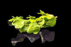 Alguns ramos do aipo Fotografia de Stock Royalty Free