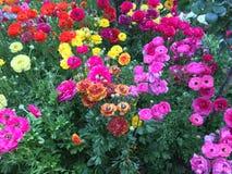 Alhambra blommor royaltyfri fotografi