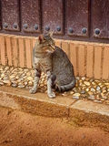 Alhambra Cat Granada Outside Nasrid Palaces Andalucia Spanien Arkivfoto