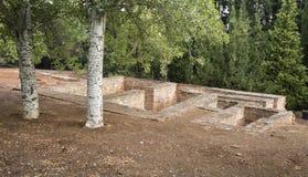 Alhambra Engraved Trees fotos de archivo libres de regalías