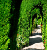 Alhambra garden Royalty Free Stock Images
