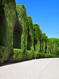 Alhambra garden in Granada, Andalusia Royalty Free Stock Photos