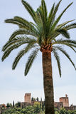 Alhambra and palm tree. Stock Photo