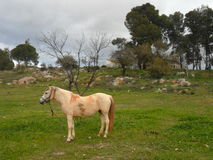 Alhaurin De Los angeles Torre - koń w polu Obrazy Royalty Free