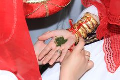 Alheña en la palma NOCHE DE LA ALHEÑA imagen de archivo libre de regalías