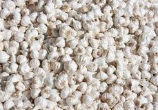 Alho branco orgânico fresco do bulbo Imagens de Stock Royalty Free