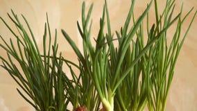 Alho-porro verde fresco vídeos de arquivo