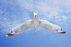 Ali aperte dell'uccello Fotografia Stock