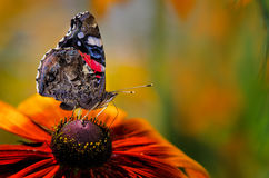 Ali chiuse della farfalla Fotografie Stock Libere da Diritti