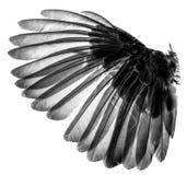 Ali degli uccelli su fondo bianco Fotografia Stock