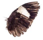Ali degli uccelli su fondo bianco Immagine Stock Libera da Diritti