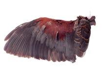 Ali degli uccelli su fondo bianco fotografia stock libera da diritti
