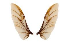 Ali dell'insetto isolate su fondo bianco Fotografia Stock