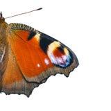 Ali della farfalla dell'occhio del pavone (Inachis io) Fotografia Stock Libera da Diritti