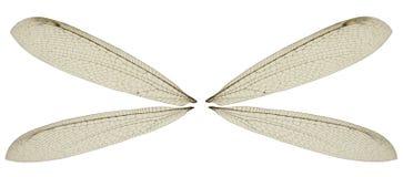 Ali della mosca del drago Immagine Stock