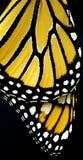 Ali di una farfalla Fotografie Stock