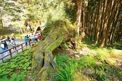 Ali Mountain, situato nell'est di Chiayi, provincia di Taiwan Fotografia Stock