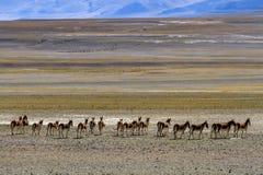 Ali Wildlife Imagen de archivo libre de regalías