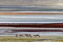 Ali Wildlife. Eastphoto, tukuchina,  Ali Wildlife, outdoor scenery Stock Image