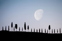 Aléia de Cypress sob o luar Fotos de Stock