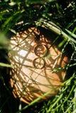 Aliança de casamento em cogumelos fotografia de stock royalty free