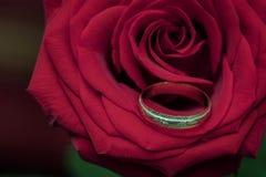Aliança de casamento na rosa do vermelho como um símbolo do amor fotografia de stock