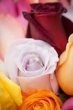 Aliança de casamento nas flores Imagens de Stock Royalty Free