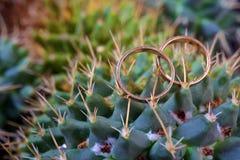 Alianças de casamento ao lado da planta do cacto Fotografia de Stock
