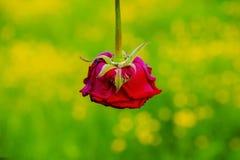 Alianças de casamento bonitas com flores Foto de Stock Royalty Free